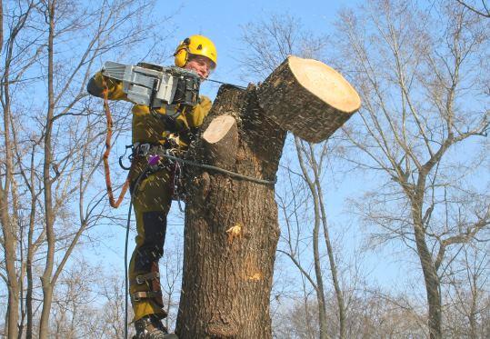 Спил деревьев в Челябинске цена от 577 руб.
