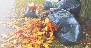 Уборка листьев в Челябинске цена от 680 руб.